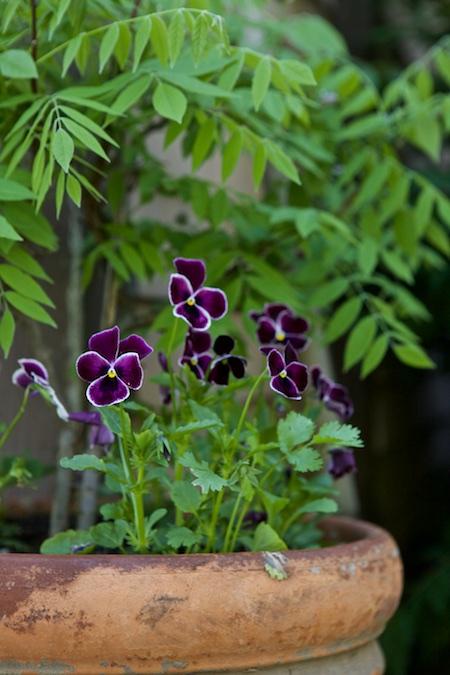 spring cassis 2