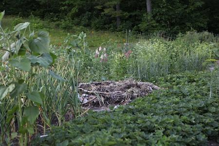 Main edible garden 3