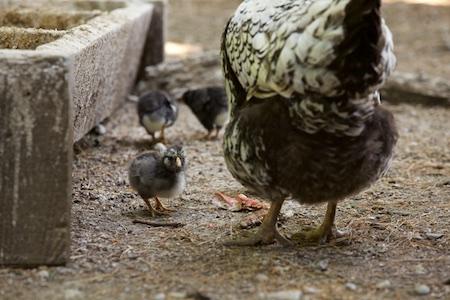 baby birds 3