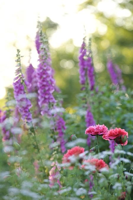the garden in early july 15
