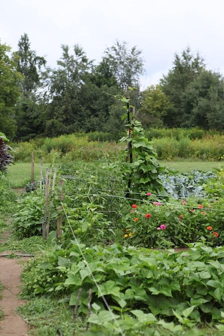 Community Garden 10