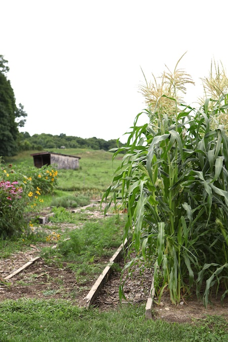 shelburne farms edible gardens 1