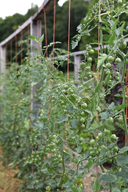 shelburne farms edible gardens 7