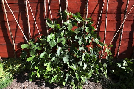 lacko-slatt-walled-lower-garden-5