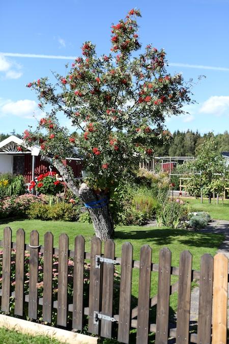 swedish-community-garden-day-4-3