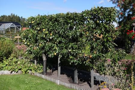 swedish-community-garden-day-4-4