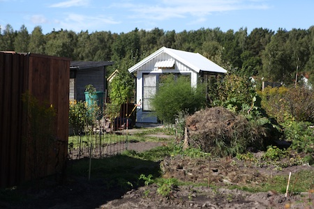swedish-community-garden-plot-5