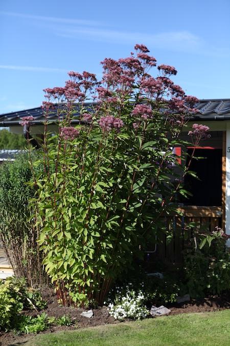 swedish_community_garden-9