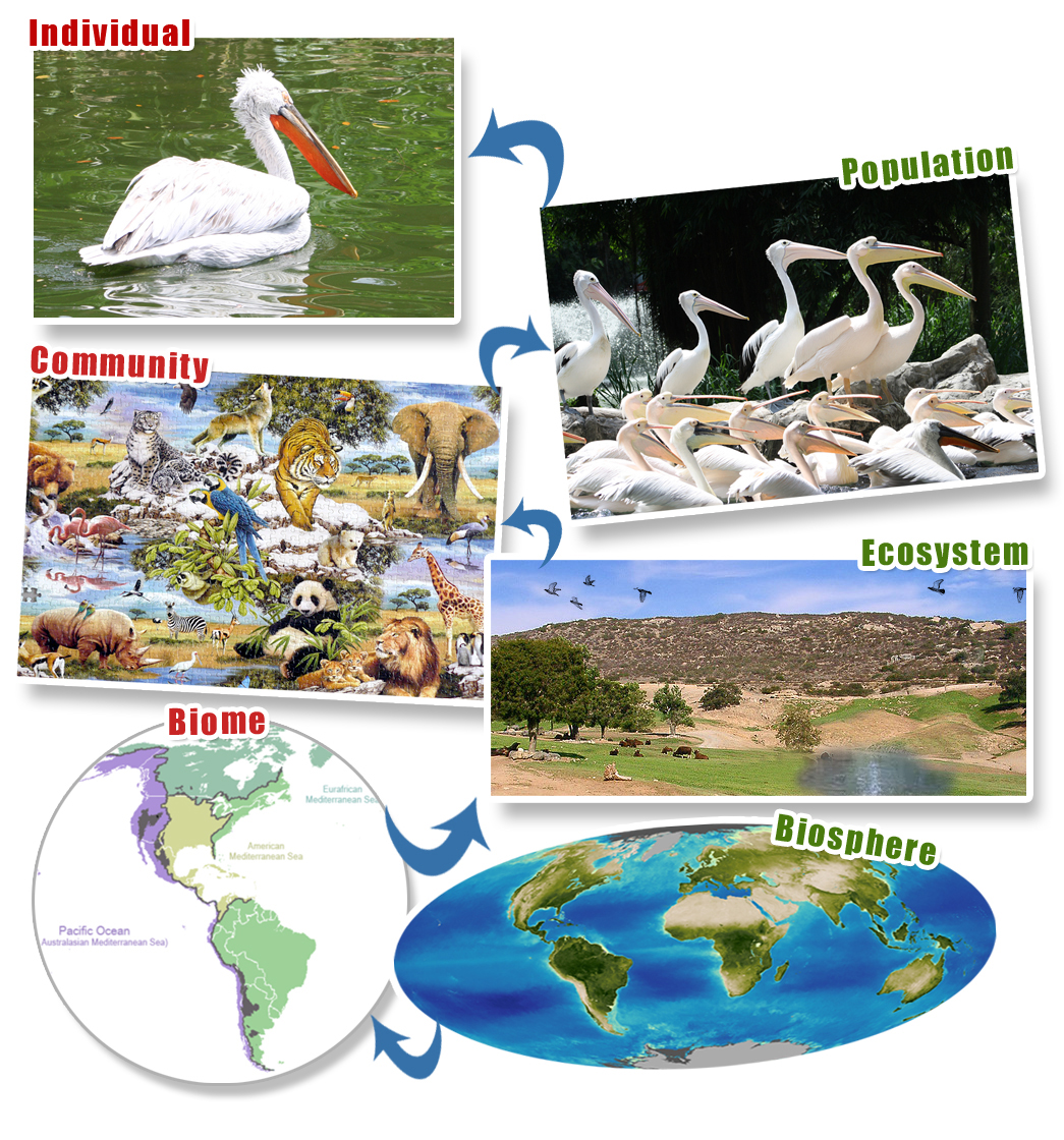 Levels Of Ecological Organization Assessments