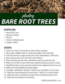 Bare_root_trees