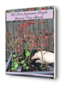 Japanese_maple_cover