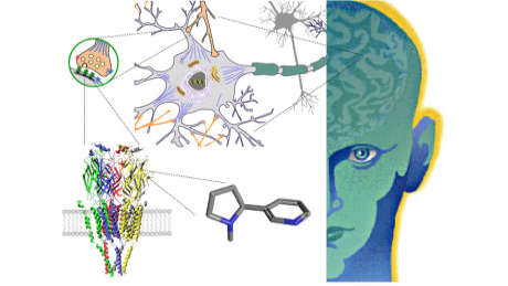 Read me! Free Online Course - Drugs and the Brain on Coursera