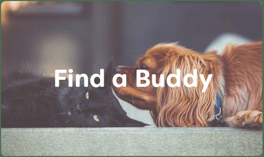 find-a-buddy