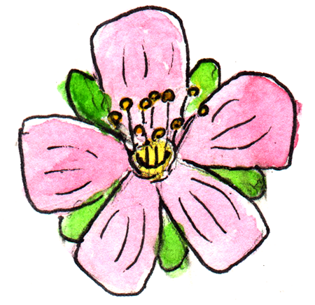 watercolor painting of an apple blossom