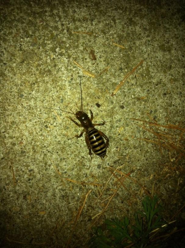 Huge Freaking Bug!