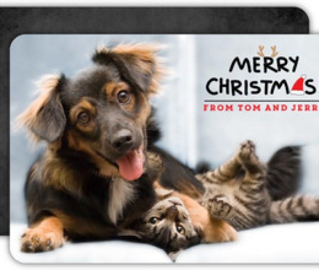Cute Pets Christmas Greeting Photo Card