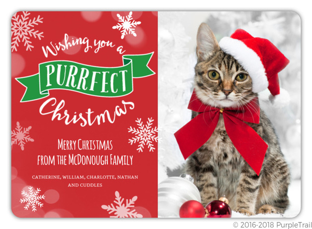 Purrfect Christmas Cat Photo Card Cat Christmas Cards