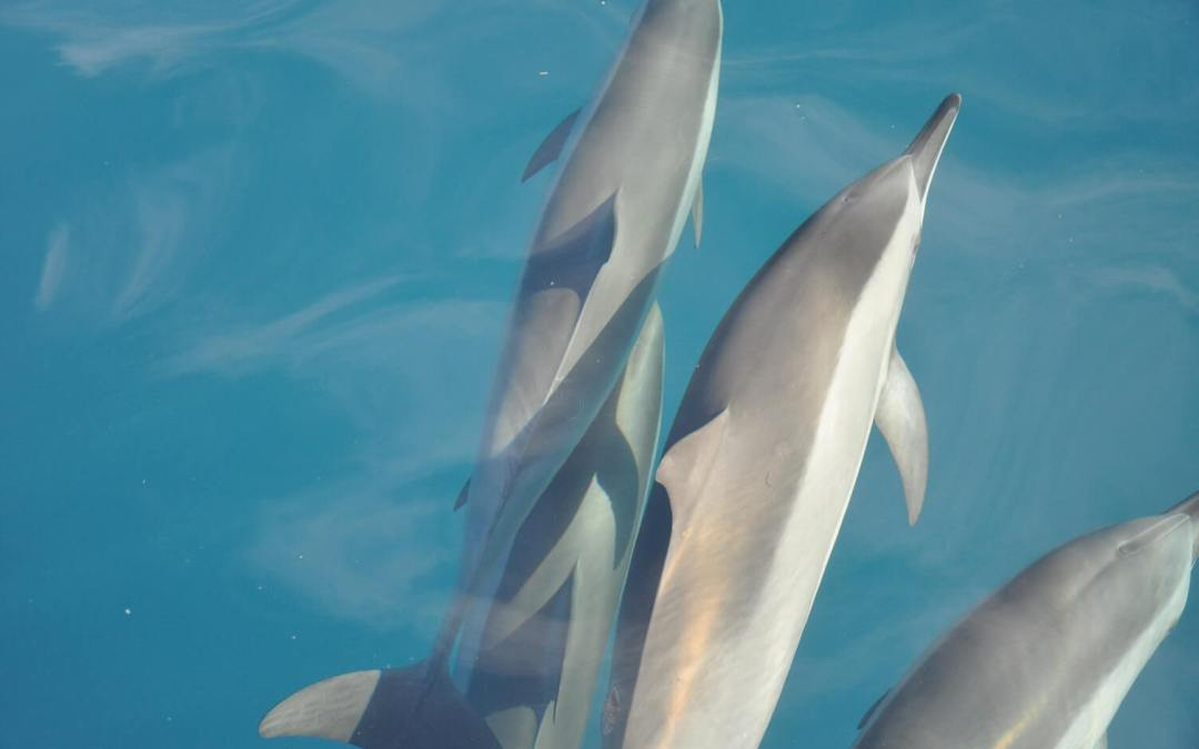 Do Dolphins Eat Cats? Interesting Market Research Lessons from Kids