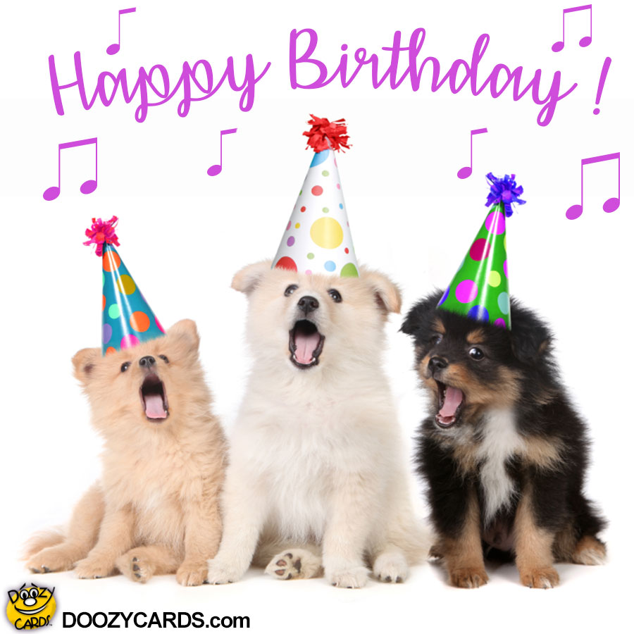 Happy Birthday Meme With Dogs Funny Dog Birthday Wishes