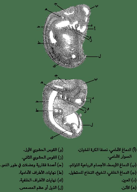 الأدلة المؤيدة للتطور أوجه الشبه والاختلاف بين الكائنات
