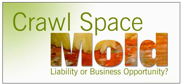 crawl space mold