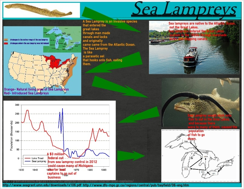 sea lamprey the invaders of the great lakes Sea lampreys invaded the great lakes in the early 20th century through shipping  canals in their native range, lampreys live part of their lives in salt water, but.