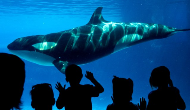 """Killer Whale"" by Chris Rivait"