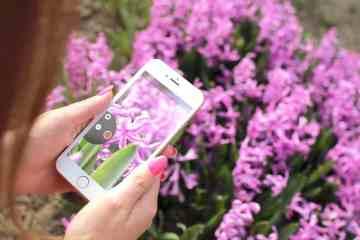 iphone-photo-flowers