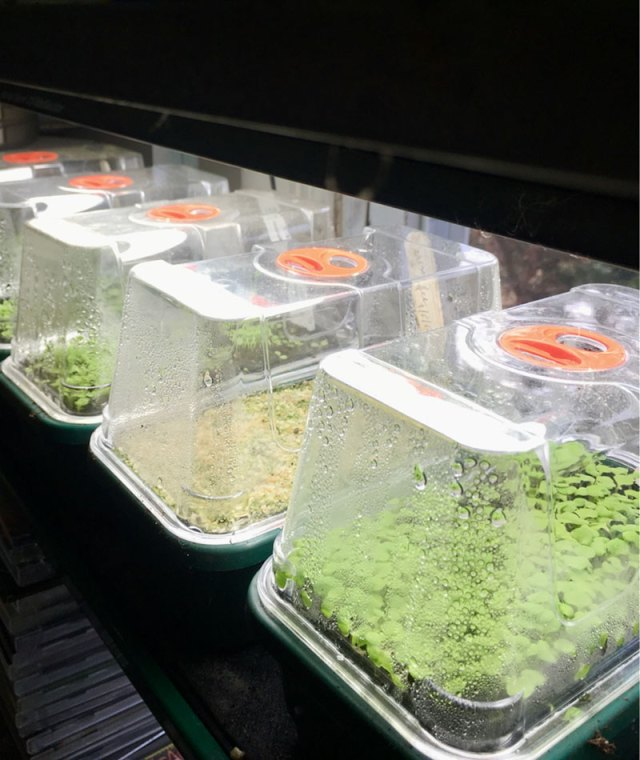 growing lights for starting seeds