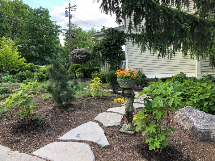 side yard with new plants