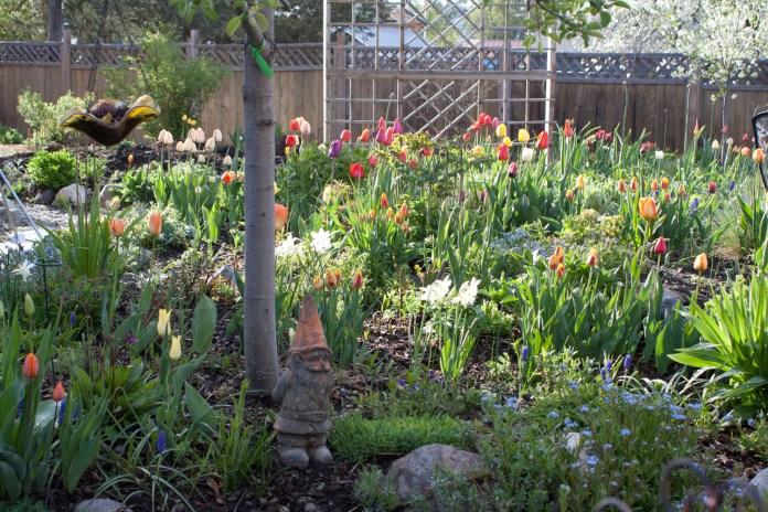 spring garden full of tulips