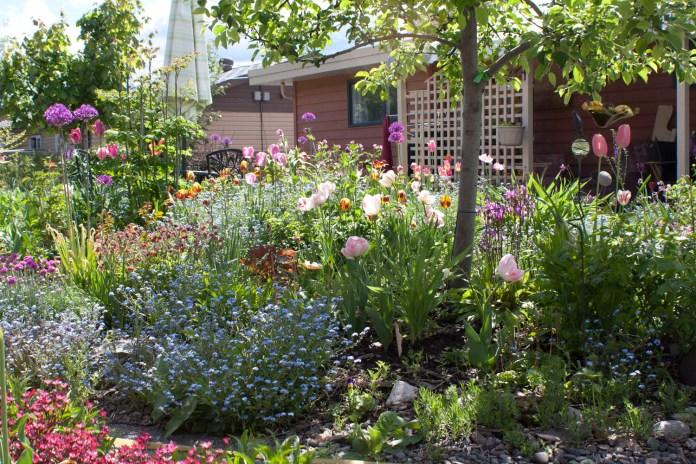 garden full of flowers in bloom