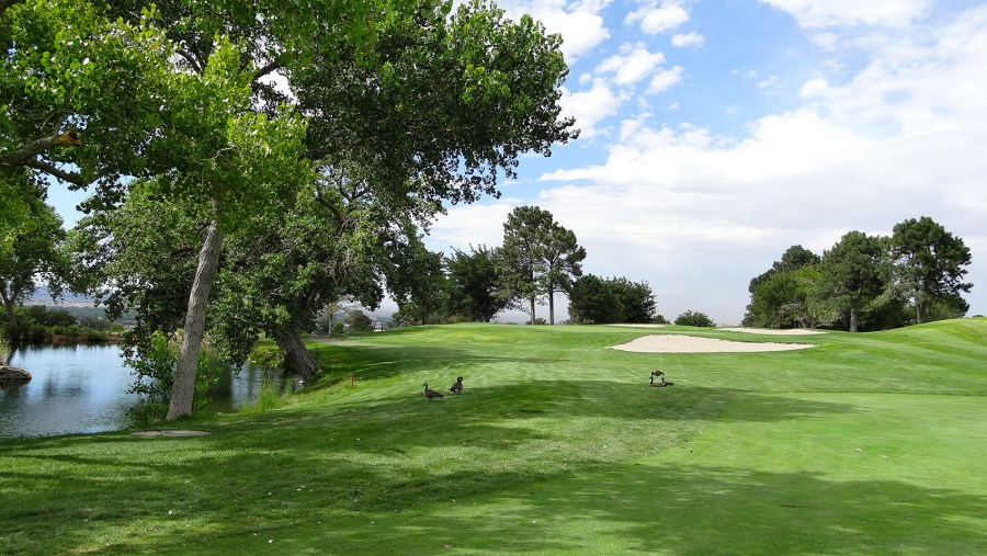 University of New Mexico  Championship    Golf Tripper       UNM Championship 15th approach