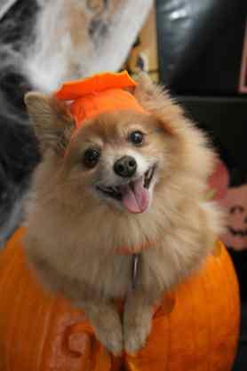 Ahhh, Lil Pumpkin