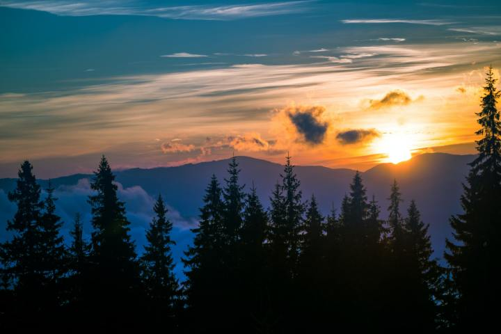 Breathtaking sunset in coniferous forest