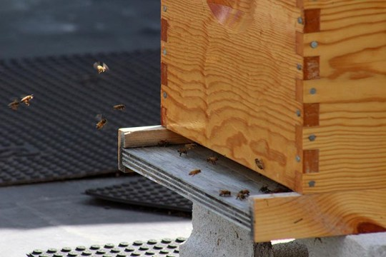 Bee Sustainable: Fulton Hive Raises Awareness of Environmental Issues