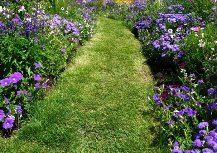 Green grasses are the only material used to ornament this pathway. Other than that, purple blossoms and greenery is added on the soil curb.