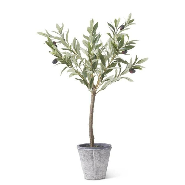 Olive Tree in Gray Wash Pot - 24