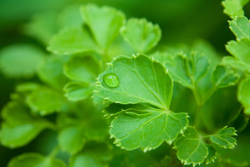 Image result for Greenery