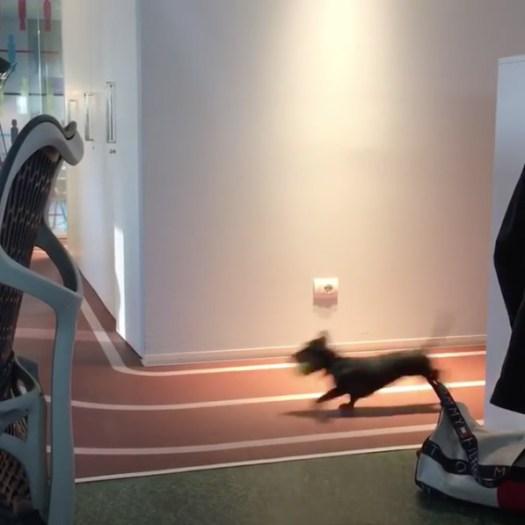 Dog Racing At Google