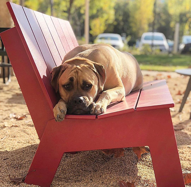Dog Relaxing On Google Bench