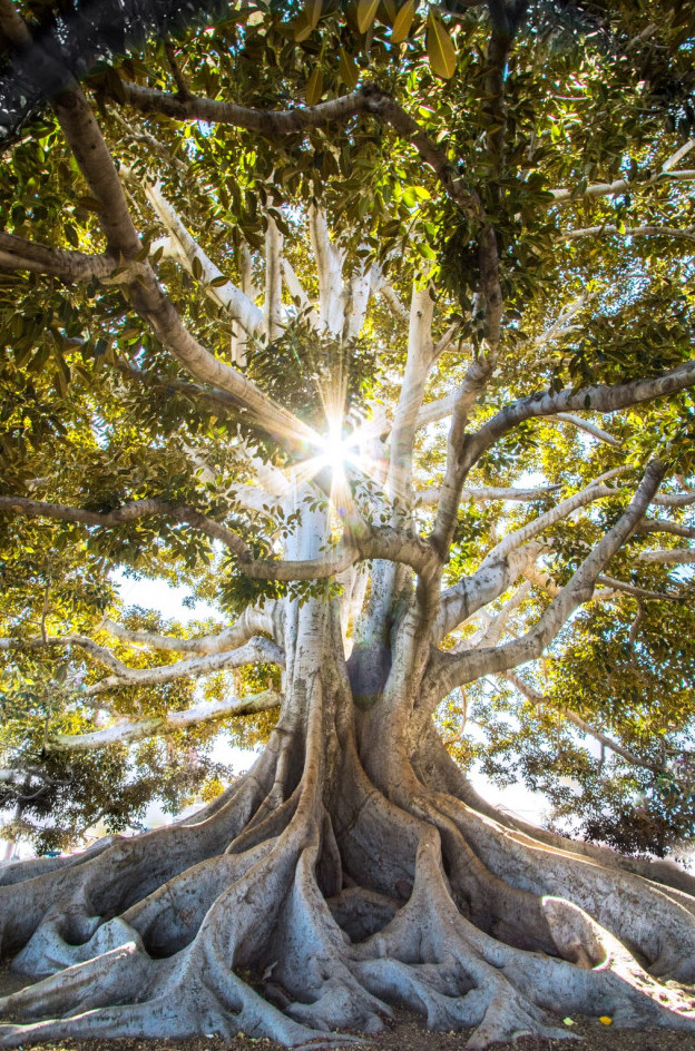 Rooted in the light