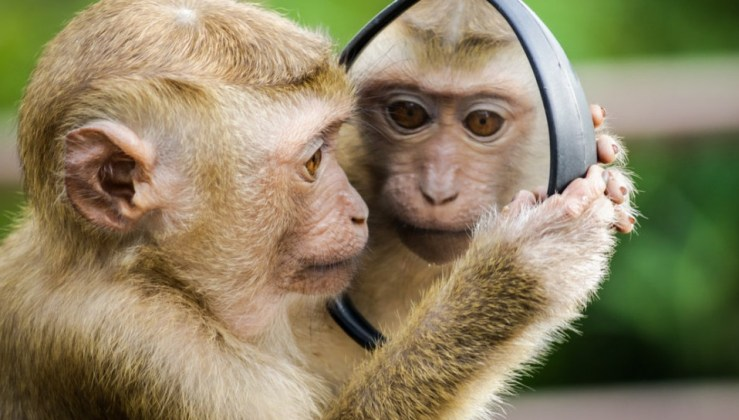Mirror monkeys