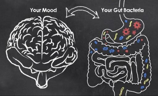 good or bad gut bacteria