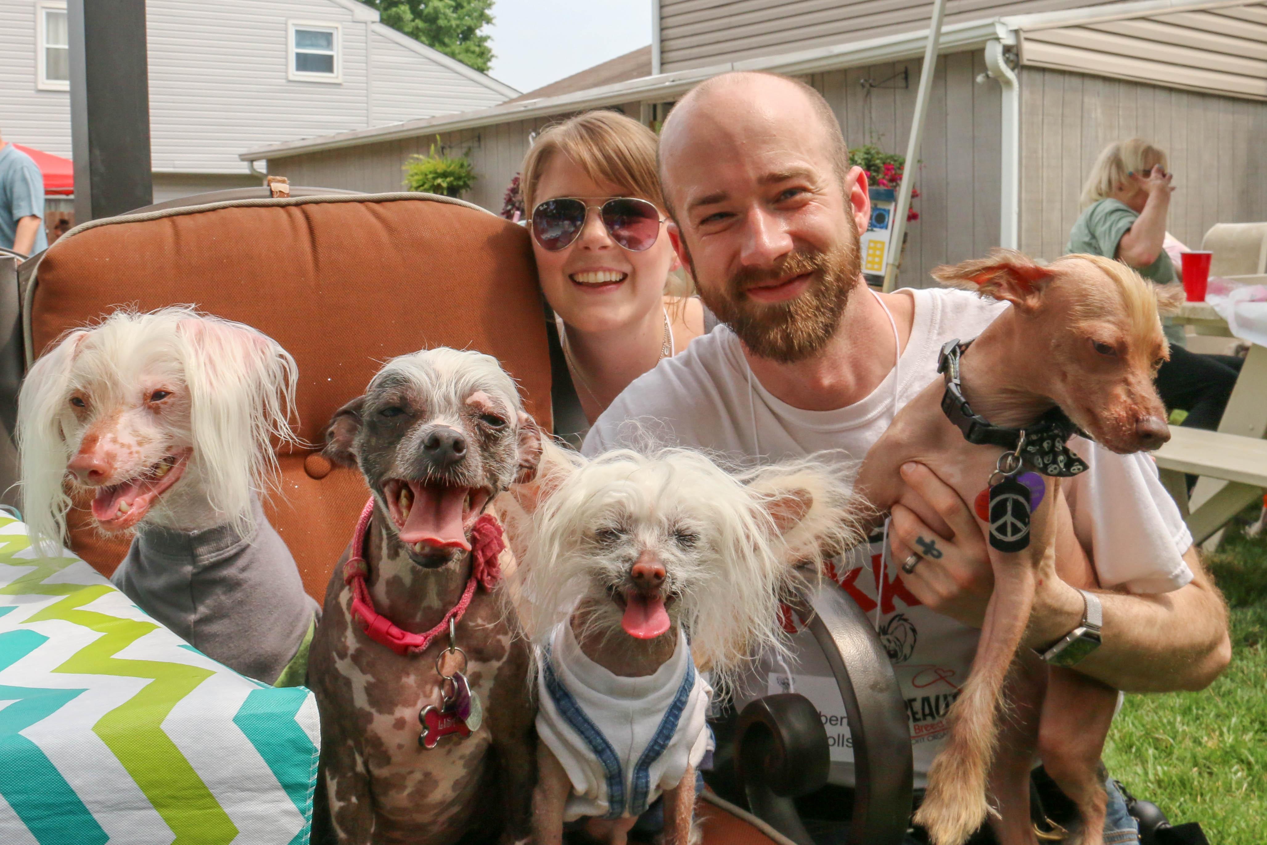 Adoption Hairless Dogs