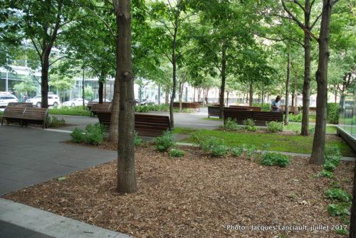 Forêt urbaine, place Jean-Paul Riopelle, quartier international, Montréal, Québec