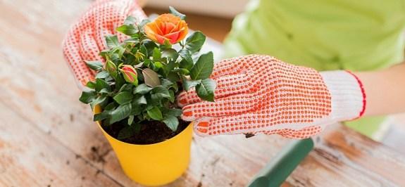 Lo que debes saber sobre el cuidado de las plantas - Noticia - El ...