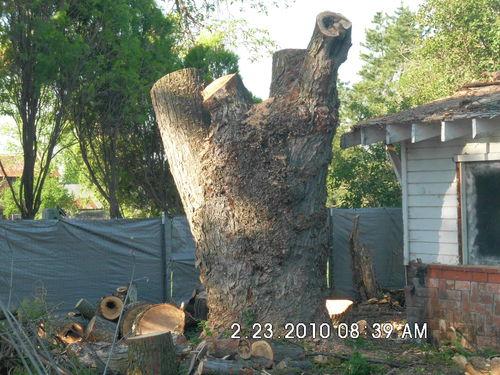 burl wood identification