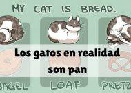 Los gatos son en realidad pan