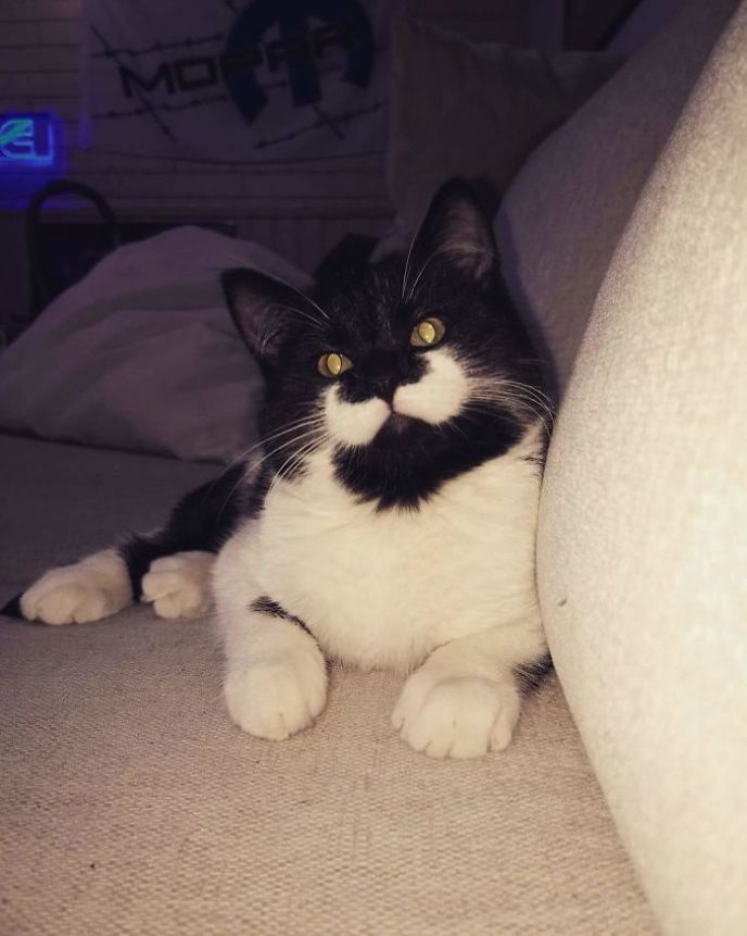 marcas de pelajes de gatos muy divertidas - Tremendo bigote de gato